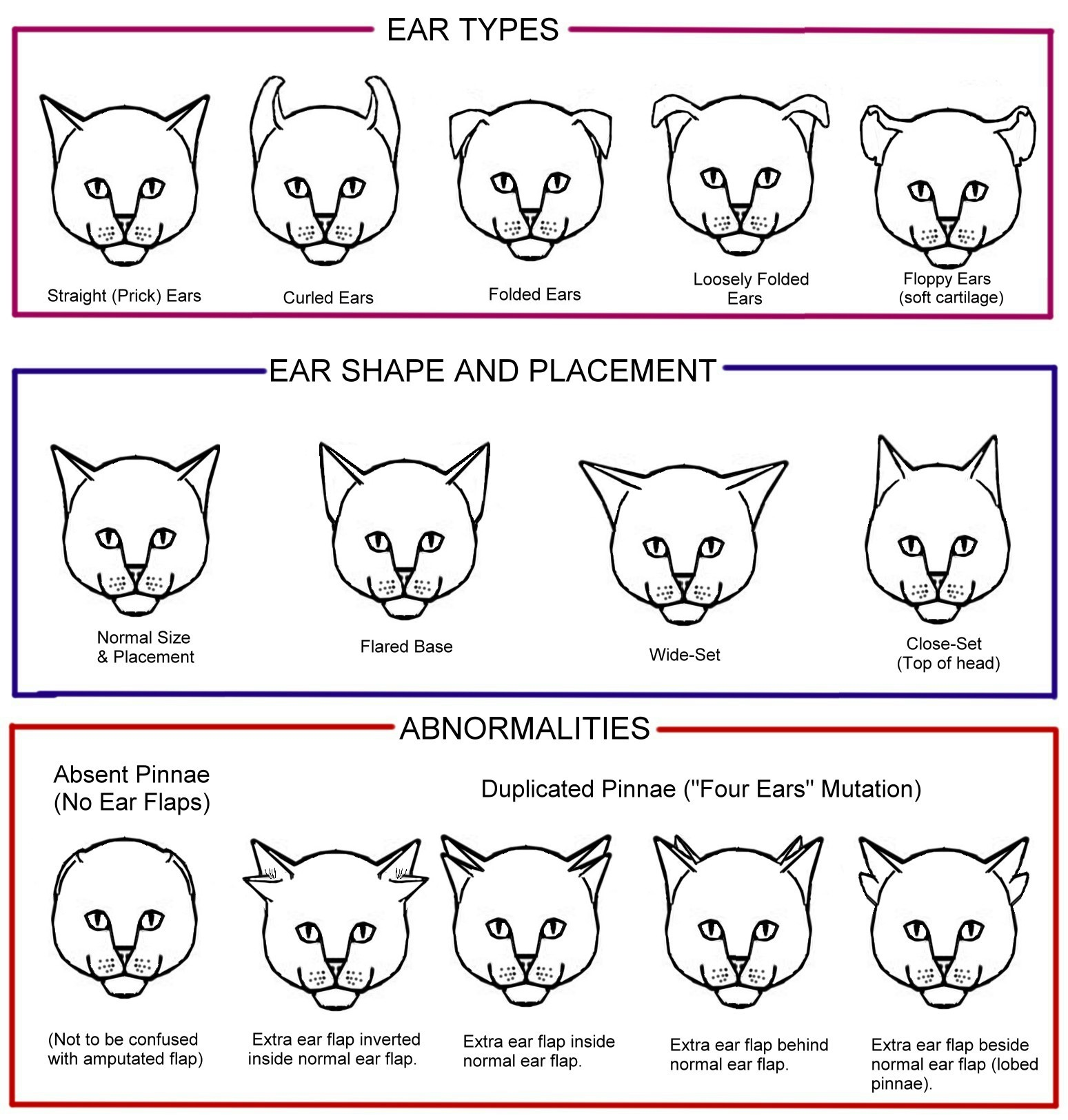 Why Do Cats Ears Bent