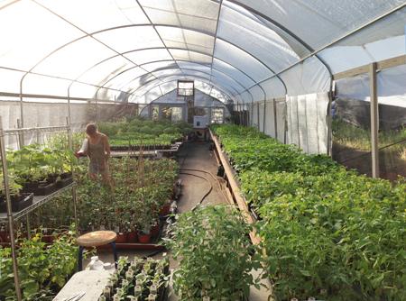 Cost Of Building Organic Garden  Feet